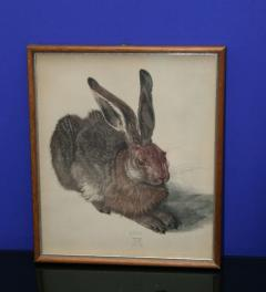 A young rabbit**